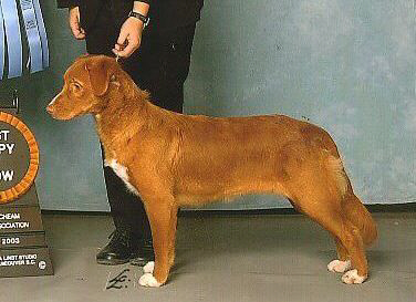 Blaze at 10 months old, winning BPIS, Group 4 & New Champion!